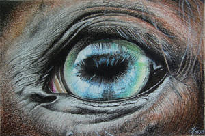 Horse's Eye by cedricmoulin