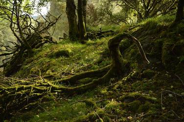 Woods by AndreasServan