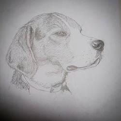 My dear dog by Uncle-Sarah