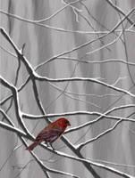 Winter Color by RandyAinsworth