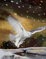Snowy Owl by RandyAinsworth