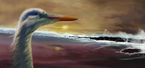 Heron Beach by RandyAinsworth