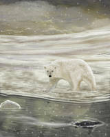 Polar by RandyAinsworth