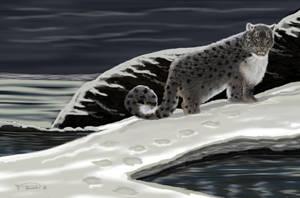 Snow Leopard by RandyAinsworth