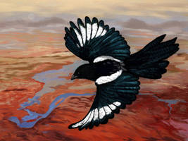 Magpie by RandyAinsworth