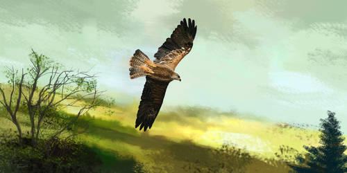 Falcon by RandyAinsworth