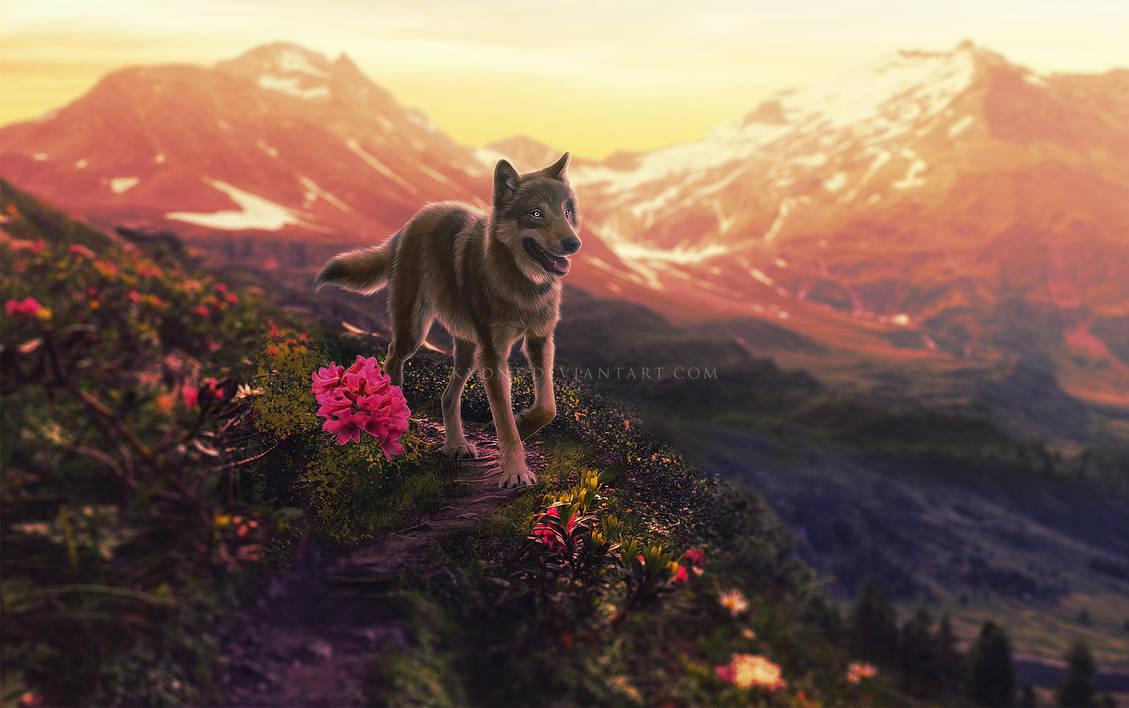 sunrise son by Kydnt