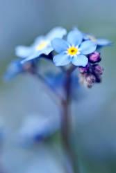 In bloom by Flunipam