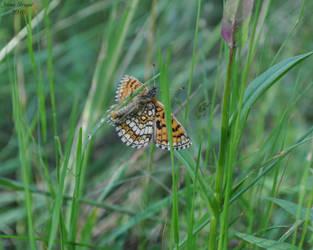 Butterfly 2 by dzejn