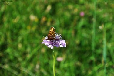 Butterfly 3 by dzejn