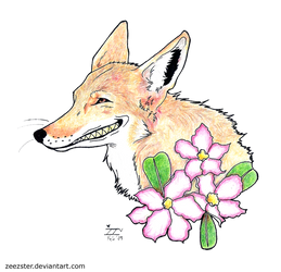 Coyote Smile by Zeezster