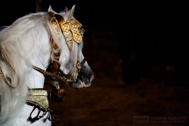 Arabian Nights by toteZitrone