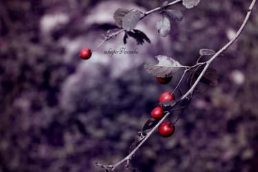 colours of autumn. by whisperVeronika