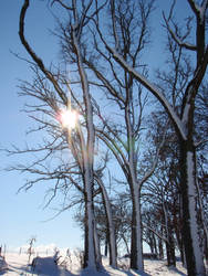 winter sky by lovingstar