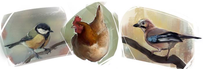 Animal studies #2 - Local birds by YanaMihailova