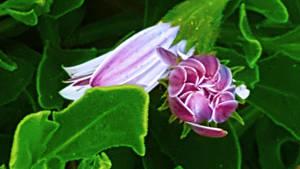 Flower by HarlequinAmidst
