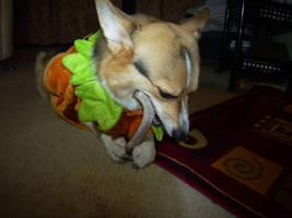 Hugo chewing bone in costume 1 by GameraBaenre