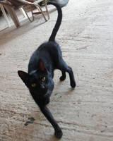 Black Cat Stock III by dream-shotSTOCK