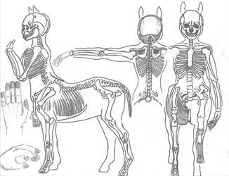 Centaur Anatomy _ Skeleton by JEDI-Sheng