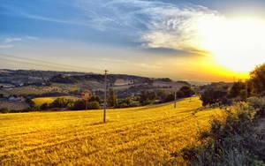 Golden field by Sh000rty