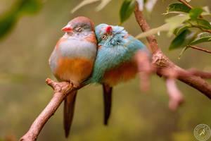 Birds in Love by BlackSunRising