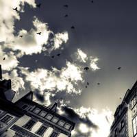 Birds by fL0urish
