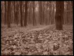 Leaf Way by SeriantSlyjarr