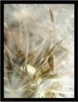 Dandelion macro by SeriantSlyjarr