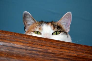 I see you! by SeriantSlyjarr