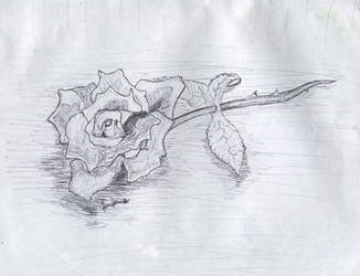 rose sketch- mastermindg by mastermindg