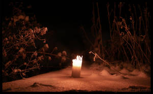 Light by Vitskog