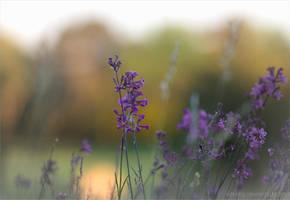 Summer Flowers by Vitskog