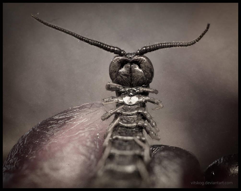 Centipede by Vitskog