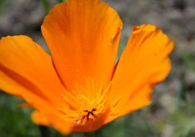 Good Morning Flower by DoggyArt