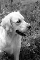 B+W Golden Garden by DoggyArt