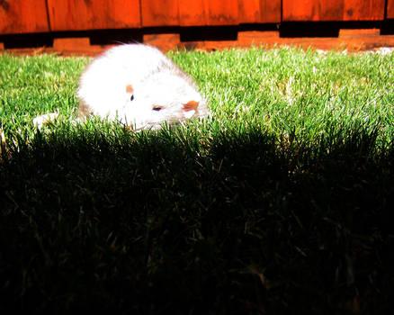 RMAX Baxil in the Grass by Kitzira