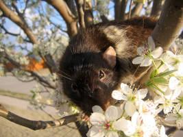Spring and Rats Series - Zumi2 by Kitzira