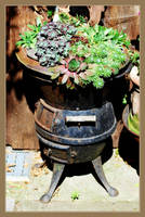 Plant Barbecue by Sharandra