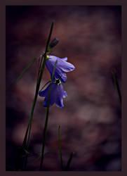 Bellflower by Sharandra