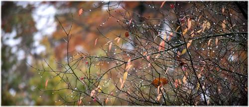 Autumn-leaves by Sharandra