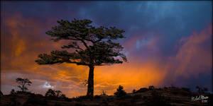 Tree At Sunset 2 by MichaelAtman