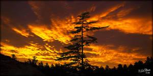 Tree At Sunset 3 by MichaelAtman
