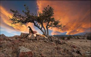 Vedauwoo Tree by MichaelAtman