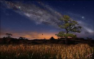 Tree in the Grass by MichaelAtman