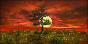 Sun Blaze by MichaelAtman