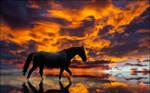 Wading Reflection by MichaelAtman