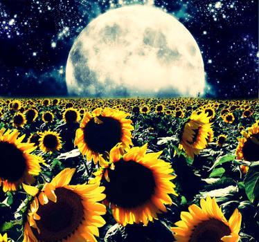 sunflowers by Reyrey33