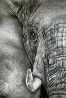 Elephant by Mixielion