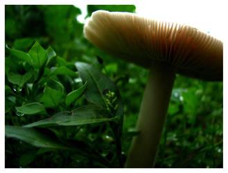 Mushroom II by Rahdiel