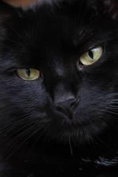 Kitty - the new by Rahdiel